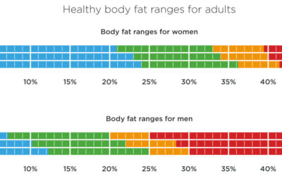 Know Your Body Fat: Total Row Explains Why it Matters